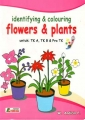 Identifying and Colouring Flower and Plants
